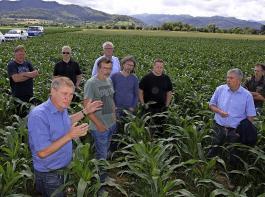 Für das ungeübte Auge steht dieser Maisbestand in der Nähe von Staufen gar nicht schlecht da. Hubert Sprich von der ZGRaiffeisen (links) warnt vor Ertragsverlusten und ungleichmäßiger Abreife. Die Fachleute befürchten, dass der Ernteschaden hier etwa 70% betragen könnte.