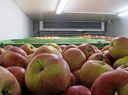 Sachgerechte Einlagerung und Abkühlung der Früchte
