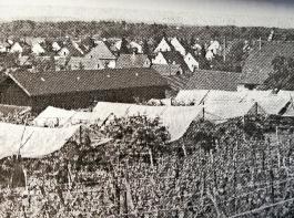 Pionierarbeit im Jahr 1982: Die Versuchsobstanlage des Landkreises Lörrach in Istein mit selbst gebauter Überdachung der Kirschbäume.