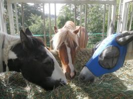 Grundfutter: In guter Qualität, ausreichend und mit der richtigen Vorlagetechnik, ist es schon die halbe Miete für ein gesundes Pferd.
