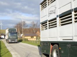 Lange Tiertransporte in Drittstaaten sind aus Tierschutzgründen und rechtlich kontrovers in der Diskussion.
