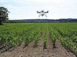 Die Geräte fliegen die Maisflächen exakt ab und verteilen die Nützlingseier gleichmäßig im Bestand.
