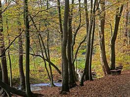 Die im Koalitionsvertrag vereinbarten Maßnahmen für den Wald bewertet der BLHV überwiegend positiv. Er sieht aber auch noch  Klärungsbedarf.