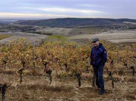 Vilmos Thummerer, eine der Stützen des Weinaufschwungs in Eger, hat sich nach und nach auf 95 Hektar Reben entwickelt. Hier steht er in seiner Lage Teknoshát.