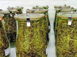 Silierzusatzstoffe benötigen  eine EU-Zulassung. Geprüfte Siliermittel mit dem DLG-Gütezeichen besitzen diese. Für den Siliermitteleinsatz gibt es keine Dokumentationspflicht, bei  Konservierungsmitteln ist die Verwendung nachzuweisen. Daher zur Sicherheit beim  Händler nachfragen, ob es sich um ein Silier- oder Konservierungsmittel handelt!