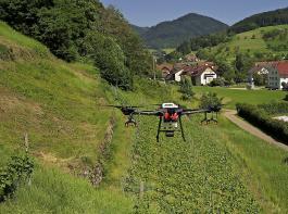 In den Steillagen der Winzergenossenschaft Roter Bur im Glottertal kommen für den Rebschutz versuchsweise Drohnen zum Einsatz.
