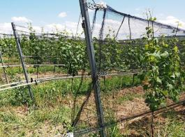 Auch das Thema Klimawandel und die Folgen für den Anbau werden in Offenburg auf der Tagesordnung stehen.