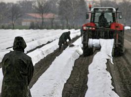 Der Deutsche Bauernverband befürchtet wegen Arbeitskräftemangels einen spürbaren Rückgang der Anbauflächen bei den Sonderkulturen.