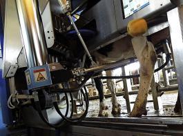 Ob nur mit Wasser oder doch mit Säure oder sogar mit Heißdampf: Die Zwischendesinfektion im Melkroboter ist wichtig, damit keine Mastitiserreger von Kuh zu Kuh übertragen werden.