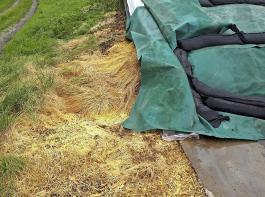 Die Bildung von nitrosen Gasen zeigt sich an einer gelb-orangenen Verfärbung. Häufig ist diese oben an den Seitenwänden oder an offenen Stellen sichtbar. Auch verfärbte Siloreste auf der Bodenplatte oder hellbraun verfärbte Pflanzen weisen auf den Austritt von nitrosen Gasen hin. Verfärbte Partien der Silage können nach Einhaltung einer Gärdauer von mehr als acht  Wochen in der Regel  verfüttert werden. Ein Nitratgehalt von unter  0,5% i.d. TM  der Ration ist unbedenklich zu verfüttern.
