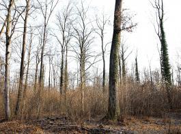 Dieser relativ lichte Bestand innerhalb der Wilden Waldweiden entspricht den Naturschutzzielen: genügend Sonne kommt zum Boden.