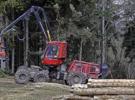 Die Bewirtschaftung der Wälder soll unter der Forstreform nicht leiden.