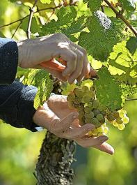 Nachhaltigkeit hat auch eine wirtschaftliche Seite, betont der Deutsche Weinbauverband.
