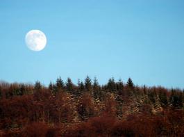 Der Mond geht auf über einem winterlichen Wald.
