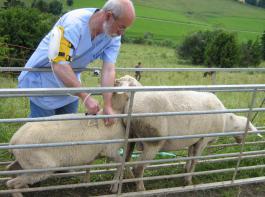 Wie in den Jahren 2010 und 2011 wird die Tierseuchen- kasse Baden-Württemberg die Impfstoffkosten übernehmen, die Kosten der Durchführung sind vom Tierhalter zu tragen.