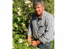 Martin Senger aus Stockach-Espasingen betreibt Obstbau mit Schwerpunkt Äpfel auf rund 30 Hektar. Beim ihm  gab es vergangene Woche erhebliche Frostschäden bei Äpfeln. Bei Zwetschgen sieht es etwas besser aus.