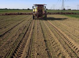 In naher Zukunft steht die Unkrautbekämpfung in Mais an.