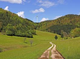 Mal über Wiesen und entlang von Weiden, mal durch den Wald schlängelt sich der Weg.