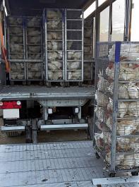 Nach 18 Wochen und mit  einem Gewicht von etwa 1400 Gramm werden die Junghennen ausgestallt und verkauft.