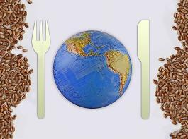 Die Ernährung der Weltbevölkerung hängt stark vom Weizen ab.