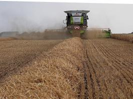 Während die Weizenerträge überdurchschnittlich ausfielen, mussten bei Gerste und Roggen Abstriche gemacht werden.