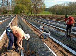 Ab 1. Januar 2019 treten die längeren Zeitgrenzen für eine kurzfristige sozialversicherungsfreie Beschäftigung unbefristet in Kraft.  Bauern gewinnen dadurch mehr Handlungsraum beim Einsatz von Saisonarbeitskräften.