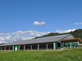 Der Sonnen- und Krughof hält die Milchkühe im modernen Laufstall.
