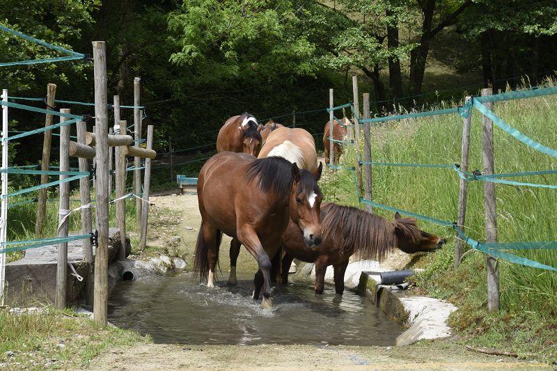 Auf Kleinen Flächen Viel Bewegung Tierhaltung Badische Bauern