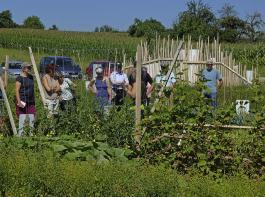 Auf dem Weltacker sorgen Führungen für Einblick in landwirtschaftliche Themen.