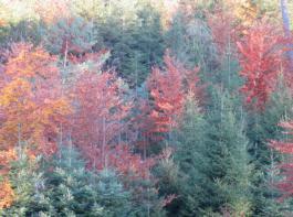 Der Umbau von Nadelreinbeständen oder nicht standortgerechten Wäldern ist genauso ein Fördertatbestand wie die Wiederherstellung von stabilen, naturnahen Laub- und Mischwäldern nach Schadereignissen wie Sturm- und Borkenkäferschäden oder Eschentriebsterben.