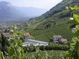 Das Dorf Tramin inmitten der Reben in einer typischen Landschaft eines alpinen Tals.