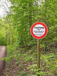 Die Vorschläge des Bundeslandwirtschaftsministeriums zum Schutz und klimastabilen Umbau der deutschen Wälder stießen überwiegend auf Zustimmung.