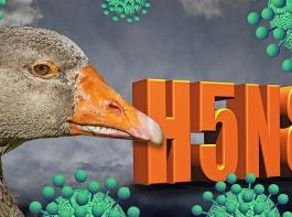 Das Vogelgrippe-Virus ist wieder da: Wichtig ist nun, die bekannten Biosicherheitsmaßnahmen lückenlos und sorgfältig umzusetzen.
