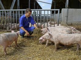 Innen- und Außenbereich sind kaum mehr zu trennen.  In diese Richtung bewegt sich der Trend im Stallbau für  Ökoschweine.