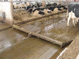 Bei planbefestigten Laufflächen werden in der Regel stationäre Gülleschieber zum Abschieben eingesetzt.