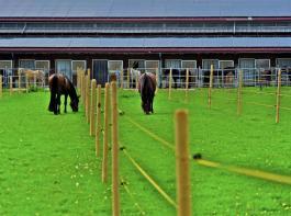 Alle untersuchten Betriebe bieten den Pferden Weidegang an. Über einen zusätzlichen  Paddock verfügen 84 Prozent der Betriebe.