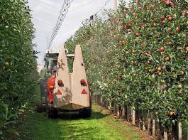 Ein Weg zur Kupferreduktion im Obstbau könnten Überdachungssysteme für Plantagen sein.