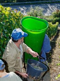 Streitthema Mindestlohn: Das politische Ringen um eine Ausnahmeregelung für Saisonarbeitskräfte in der Landwirtschaft hält noch an.
