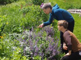Das reinste Blütenparadies: Unzählige Kräuter und Blumen bieten Nahrung für verschiedene Insekten.