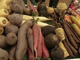 Den Konsumenten steht heutzutage eine schier unüberschaubare Vielfalt an Gemüsesorten zur Verfügung.