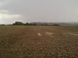 Der umfangreiche Anbau von Zwischenfrüchten fördert die Struktur des Bodens. Das Bild wurde nach einem Starkregen aufgenommen. Links: Regenstabile Krume durch Anbau von Zwischenfrüchten, rechts Bodenverschlämmung bei