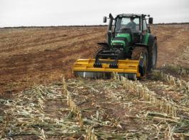 In Mais bekämpft das Mulchen der Stoppel gleichzeitig Fusariumpilze und Raupen des Maiszünslers.