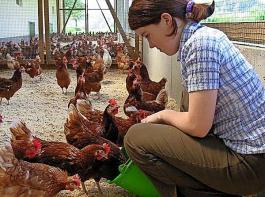 In der Geflügellhaltung gehört Herdenmanagement zu den Schwerpunkten.