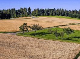 Klassisches Landschaftsbild aus Baden-Württemberg. Das Institut für Agrarökologie der Universität Göttingen hat solchen Strukturen jetzt vorteilhafte Wirkungen auf die Artenvielfalt bescheinigt.
