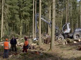 Die Beseitigung von Waldschäden kostet die Eigentümer viel Geld.