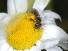 Der Bauernverband warf dem Bundesrat vor, beim Insektenschutzpaket wichtigen Empfehlungen der zuständigen Ausschüsse nicht gefolgt zu sein.