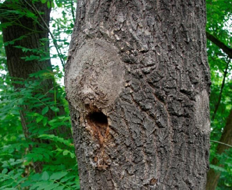 Baumarbeiten nicht ohne Artenschutzprüfung