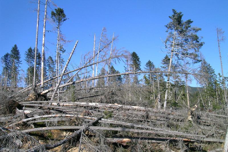 Studie zum Sturmschadrisiko in den Wäldern <br>der Schweiz