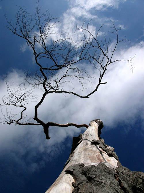 Waldsterben in Zeiten des Klimawandels: Welche Baumarten sind bei Trockenheit gefährdet?