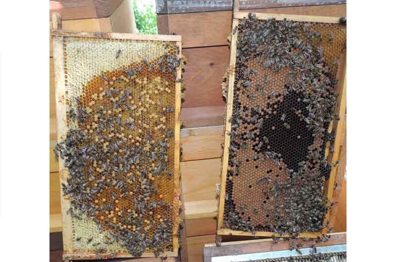 Was ist los mit unserem Bienenwachs?